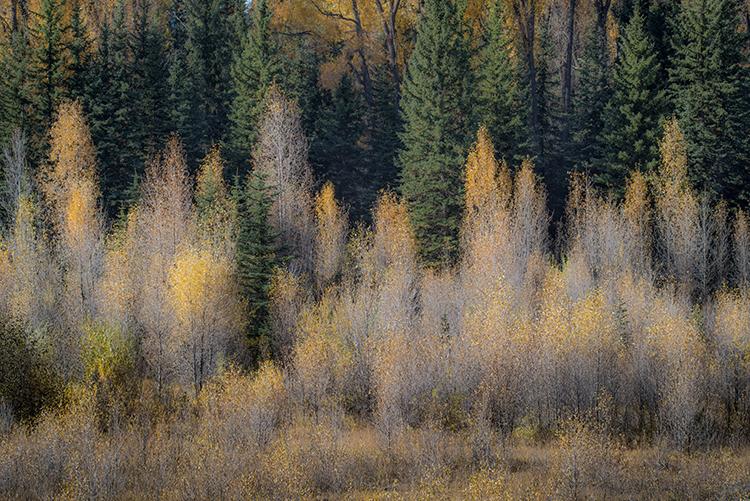 mountains, Wyoming, wy, Tetons, Grand Teton Park, landscape, Fall, trees, aspens, fall color, jackson, sunrise, snake river