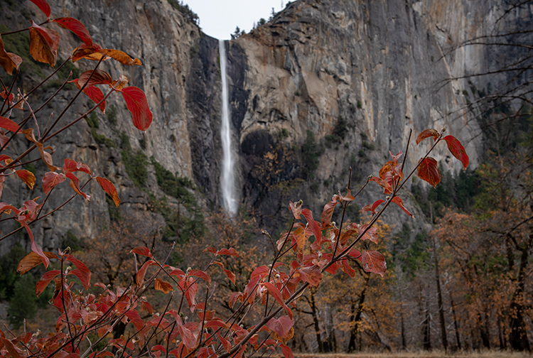 yosemite, fall, national park, sierra, mountains, trees, merced, river, dogwood, sierra nevada, water, bridalveil falls, yosemite valley, photo
