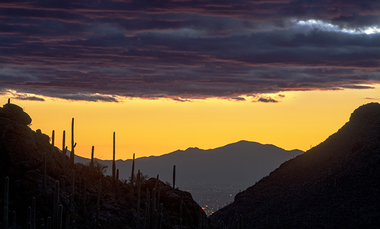 az, arizona, cactus, cacti, saguaro, national, park, tucson, sunset, sunrise, mountains, desert, sonora, wildflowers, spring, southwest, gates passs, photo