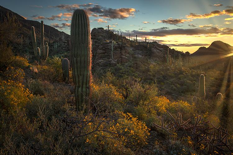 az, arizona, cactus, cacti, saguaro, national, park, tucson, sunset, sunrise, mountains, desert, sonora, wildflowers, spring, southwest, gates passs, sun rays, sun star, photo