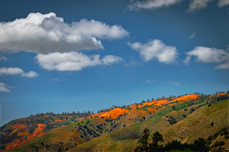 poppy, poppies, poppys, mountains, clouds, CA, california, wildflowers, spring, bloom, southern california, flora, photo