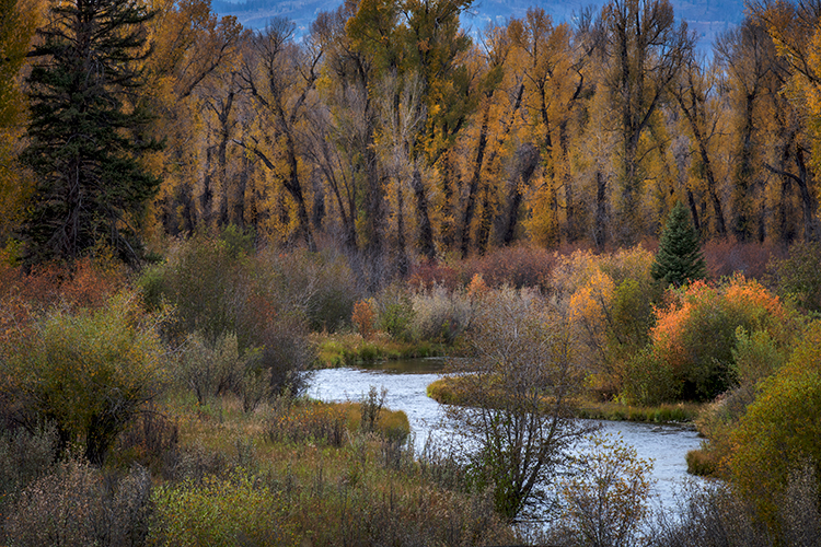 grand tendon national park, tetons, oxbow bend, snake river, snake, wyoming, wy, river, mountains, trees, water, fall, color, fall colors, aspens, snake river, grand tetons, tetons, national park, photo