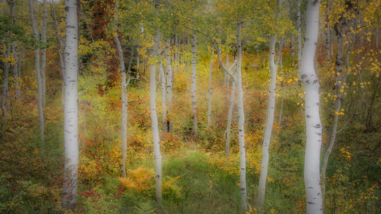 colorado, co, san juan mountains, mountains. trees, aspens, fall, fog, atmospherics, owl creek, snow, flora, autumn, rockies, kebler pass, crested butte, photo