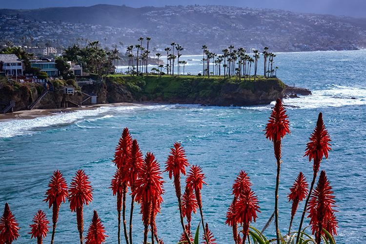 laguna, beach, bay, ca, california, sunrise, water, ocean, pacific, flora, aloes, aloe, surf, sunrise, , photo