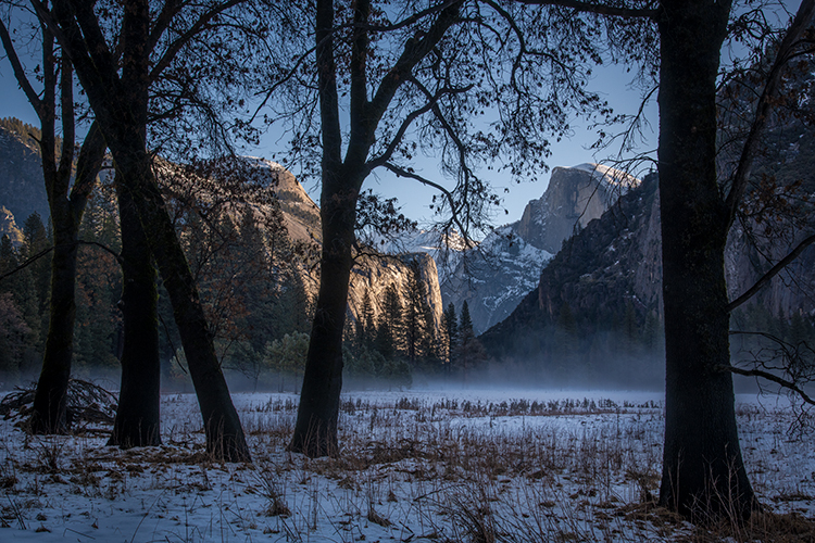 yosemite national park, yosemite, ca, california, trees, black oak, meadow, el capitan, flora, leaves, half dome, leidig, meadow, north dome, dome, photo