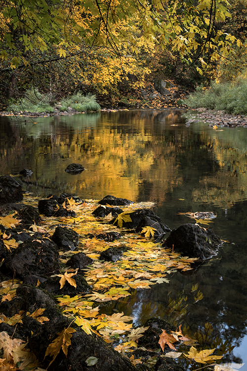Yosemite, Sierra, mountains, yosemite valley, fall, merced river, merced, water, maples, fall color, fall, reflection, photo