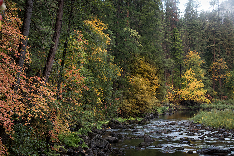 Yosemite, Sierra, mountains, yosemite valley, fall, merced river, merced, water, maples, fall color, fall, dogwoods,  wildlife, flora, fauna, pohono bridge, photo