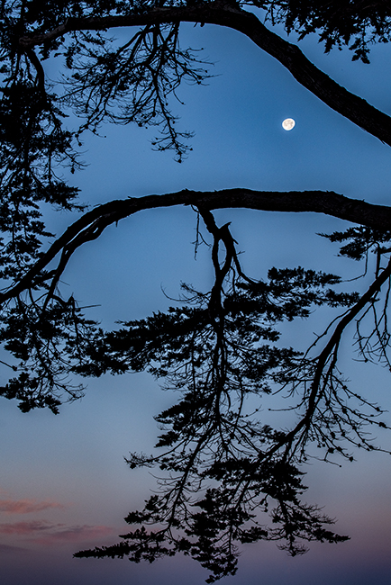 point reyes, seashore, national park, ca, west marin, marin, west, trees, cypress, tree tunnel, sunrise, moonset, moon, photo