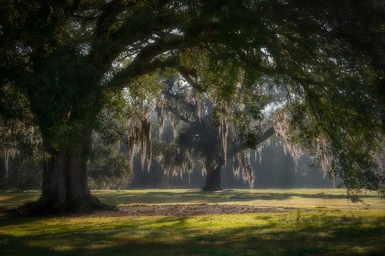 oaks, boughs, trees, fog, sunset, sunrise, south, louisiana, la, tree tunnel, photo