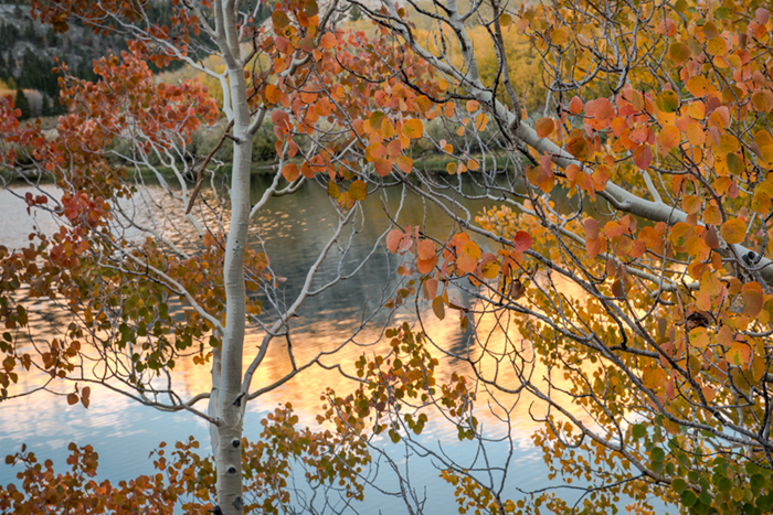 Sierra, fall. color, fall colors, mountains, trees, landscape, Bishop, aspens, california, north lake, reflections, sunrise, photo