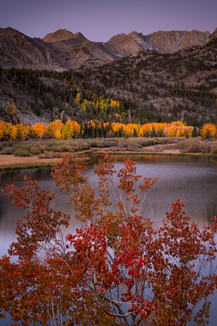 Sierra, fall. color, fall colors, mountains, trees, landscape, Bishop, aspens, california, north lake, sunrise, reflections, photo