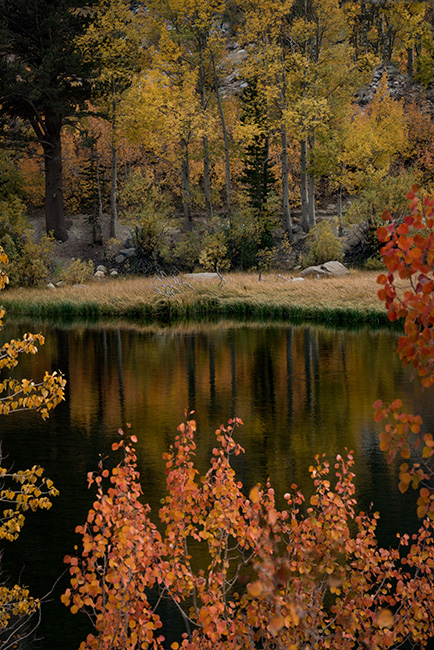 eastern sierra, sierra, aspens,  bishop creek, north lake,, fall, ca, california, trees, water, mountains, reflection, fall colors, bishop, photo