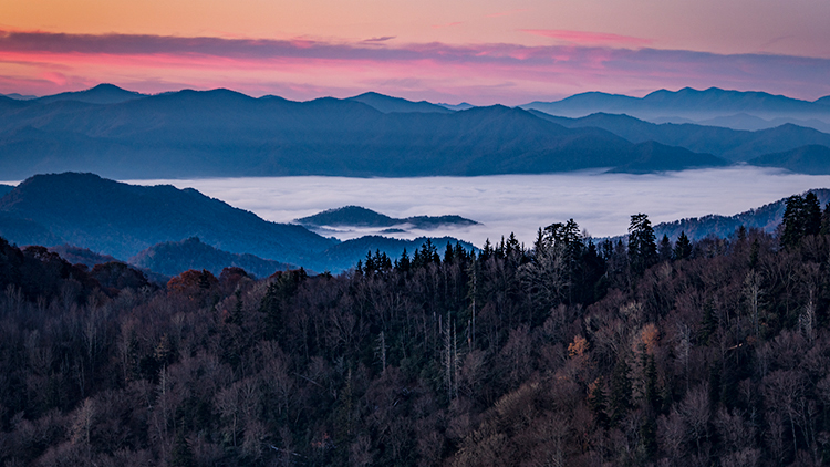 great smoky national park, smokys, mountains, fall, water, nc, tn, north carolina, tennessee, maples, colors, national, park, flora, trees, oconaluftee, river, fog, sunrise, newfound gap, photo