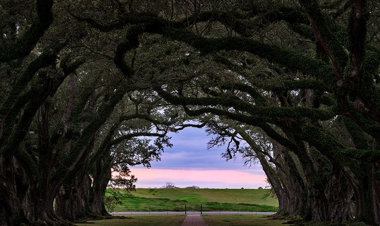 oaks, boughs, trees, fog, sunset, sunrise, south, louisiana, la, tree tunnel, photo