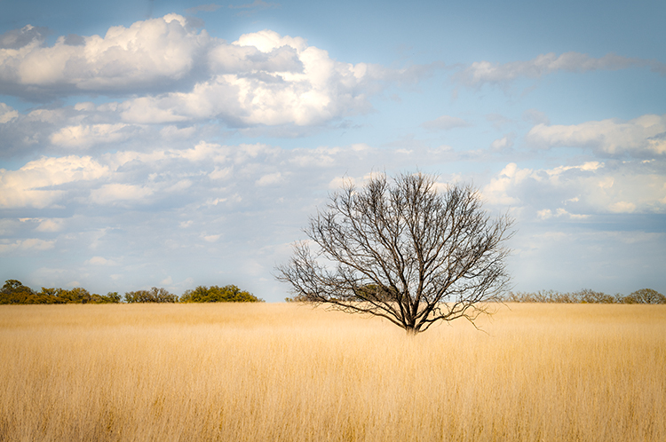 texas, tx, spring, flora, oak, trees, clouds, hill country,, photo