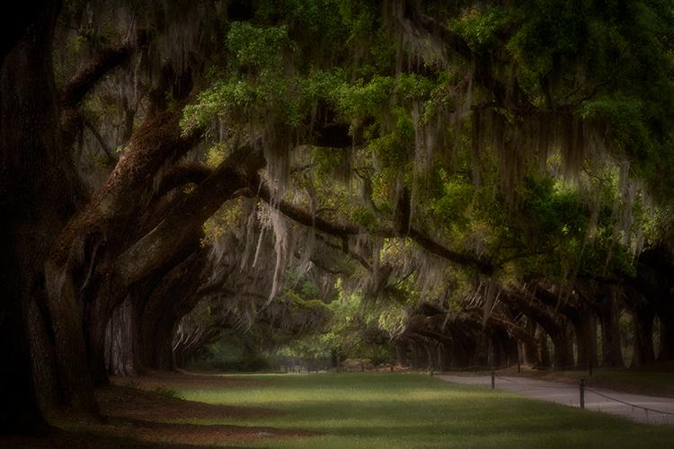 boone hall plantation, flora, oaks, spanish moss, spring, gardens, south, south carolina, carolina, plantations
