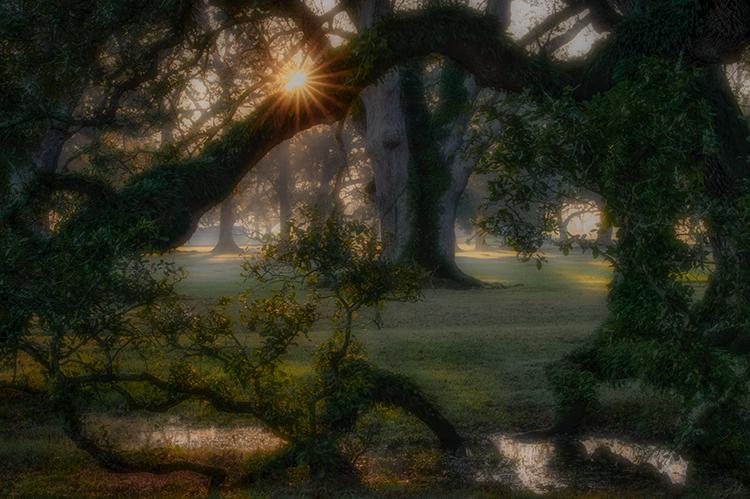 oaks, boughs, trees, fog, sunset, sunrise, south, louisiana, la, tree tunnel, spanish moss, moss,, photo