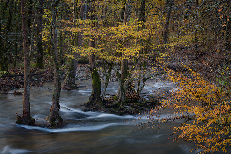 great smoky national park, smokys, mountains, fall, water, nc, tn, north carolina, tennessee, maples, colors, national, park, flora, trees, oconaluftee, river, photo