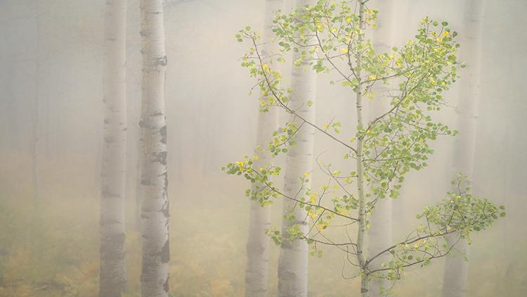Rocky Mountains, San Juan mountains, rockies, san juans, fall, autumn, color, trees, aspen, pine, fir, colorado, co, owl creek, fog, aspens, photo