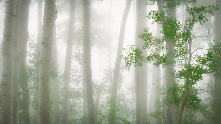 colorado, co, san juan mountains, mountains. trees, aspens, fall, fog, atmospherics, owl creek, ridgway, snow, flora, autumn...