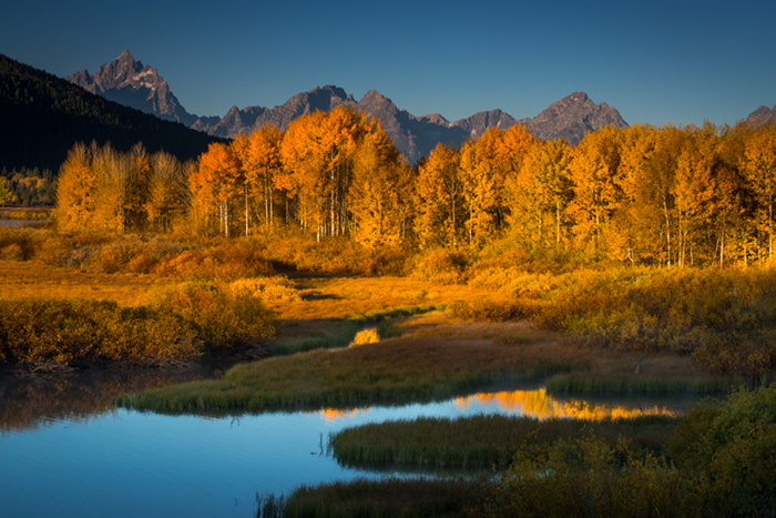 mountains, Wyoming, wy, jackson, Tetons, Grand Teton Park, landscape, Fall, trees, aspens, fall color, snake river, oxbow bend, dawn, sunrise, water, photo