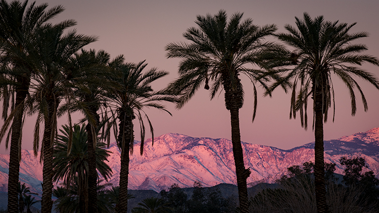California, ca, sunrise, palm trees, trees, snow, atmospherics, desert, southern ca, photo