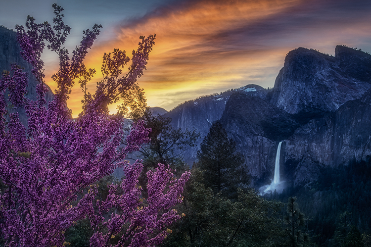 yosemite national park, yosemite,  merced river, valley, spring, flora, sierra, yosemite valley, water, sunrise, half dome, bridalveil falls, bridalveil, falls, red bud, bloom, sentinel dome, photo