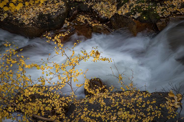 eastern sierra, sierra, aspens,  rock creek, fall, ca, california, trees, water, mountains, fall colors, fall colors , photo
