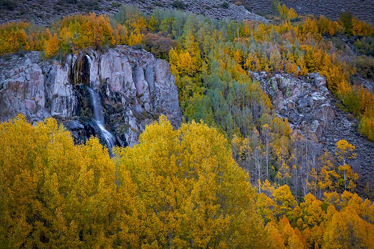 Eastern Sierra, Sierra, CA, California, Fall, mountains, foliage, leaves, autumn, aspens, flora, trees, water, bishop, creek...