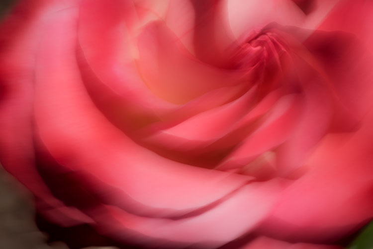 impressions, movement, roses, sheer magic, motion, photo