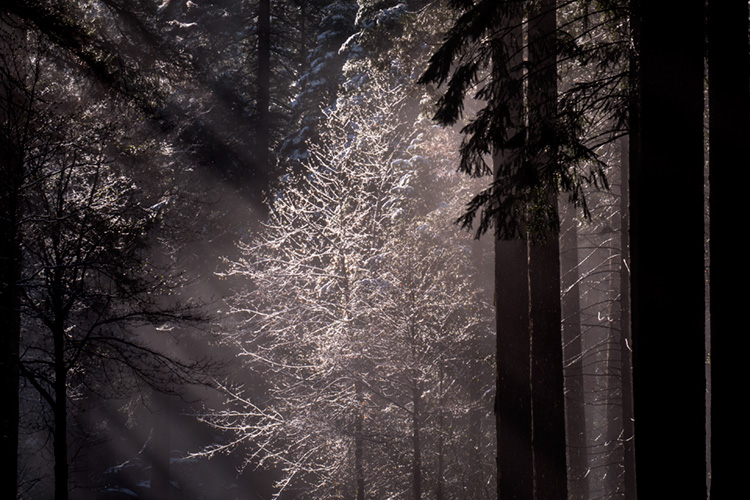 yosemite, national park, park, trees, sierra, california, ca, spring, merced, river, water, sunrise, snow, ice, sun, beams, photo