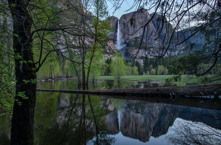 yosemite national park, yosemite, ca, california, trees, black oak, meadow, el capitan, flora, fog, mist, steam, sunrise, morning, yosemite falls, falls, swinging bridge, reflection,, photo