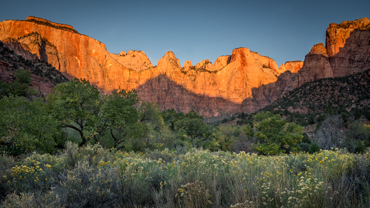trees, fall, fall color, zion, mountains, utah, ut, southwest, virgin, river, virgin river,  cottonwoods, twilight, sunrise, towers of the virgin, towers,, photo