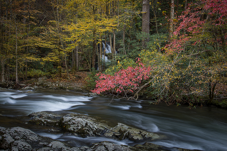 great smoky national park, smokys, mountains, fall, water, nc, tn, north carolina, tennessee, maples, colors, national, park, flora, trees, tremont, river, photo